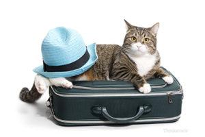 travelingpets2